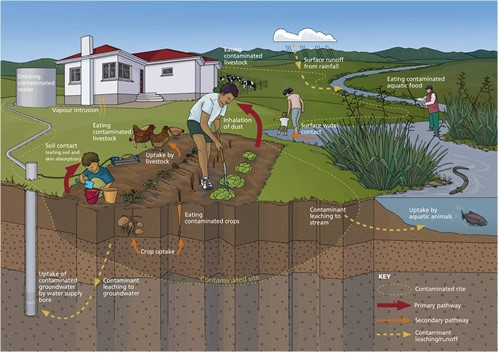 soil contamination explanation